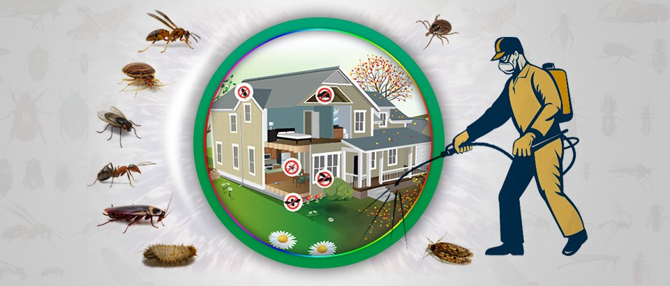 Reasons Why You Should Trust OKC Exterminators in Controlling Pests