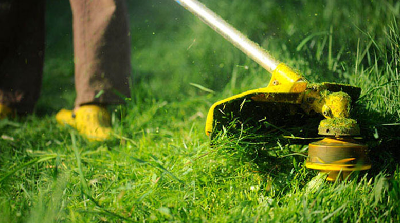 How to Start Lawn Care Services in Virginia Beach