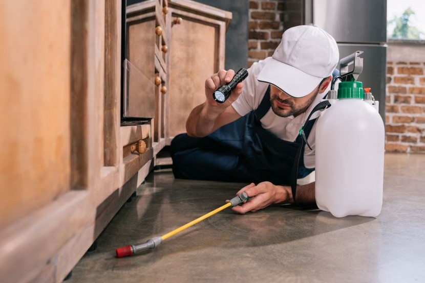 7 Tips for Choosing The Top Pest Control Company in Boise!